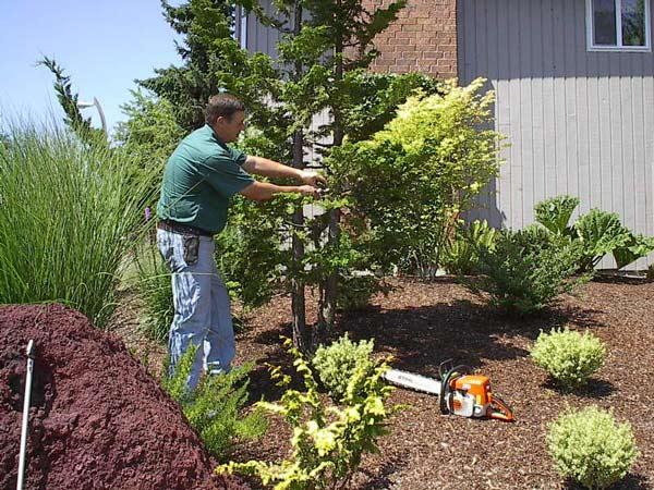 Mantenimiento de jardines for Mantenimiento de jardines